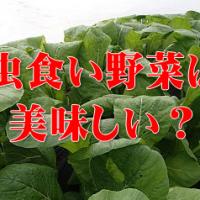 虫食い野菜は美味しい
